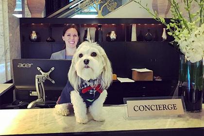 Отель предложил одиноким постояльцам пообниматься с собакой