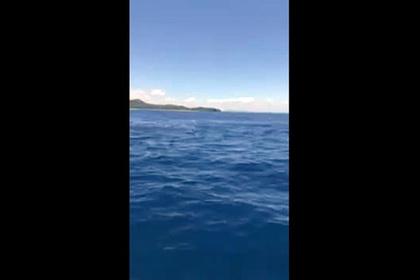 Рыбаки на гидроцикле утолили голод 15 тупорылых акул