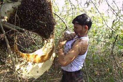 Индиец утрамбовал рой пчел под майку