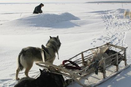 Собака застрелила из ружья хозяина в России