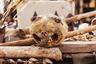 На Акодессеве можно купить головы, хвосты, черепа и кожу самых разных животных. В ассортименте есть части тел крокодилов, кошек, обезьян, стервятников, сов, змей и других существ.