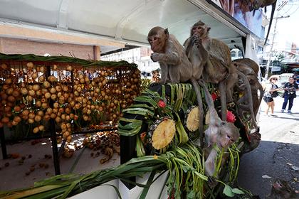 Три тысячи голодных обезьян разорили две деревни в Таиланде