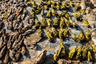 «Было невероятно жарко, солнце пекло, и на нем сушились птицы, змеи, кожи, части тел животных в красно-серой пыли. В воздухе стоял запах гниения», — рассказала фотограф Кристина Цзубик, побывавшая на Акодесеве в сентябре 2016 года.