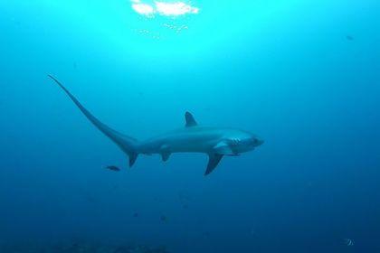 Триста мертвых акул нашли на шоссе в Мексике