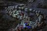 На другом краю света турецкий фотограф Явуз Арслан снял молодого пастуха, поднимающегося с отарой овец по горной дороге.