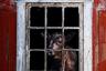 Фрида Изадора Оршет из Норвегии называет себя коровьим фотографом, и не просто так. Все фотографии, которые она публикует в Instagram, посвящены коровам. Когда во время одной из прогулок ей попалась старая пивоварня с молодой коровкой внутри, она знала что делать. «Я должна была снять корову (ее зовут Эмили) за этими красивыми окнами», — говорит девушка.