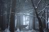 Чтобы поймать такой кадр, нужно терпение. Немецкий фотограф Роланд Кремер не один час подстерегал оленя в заснеженном горном лесу в Швабском Альбе. Одно хорошо: до теплого дома было рукой подать. «Меня вдохновлял тот факт, что за хорошими снимками необязательно далеко ехать, — говорит он. — Этот был сделан практически у меня во дворе».
