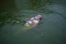 Это, конечно, не море Галилейское: местные жители превратили в естественный пруд обычный бассейн и запустили туда рыбу. Старому священнику нравится нежиться в теплой воде. Здесь легко забыть о проблемах Бока Колорадо.