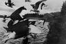 Так мог бы выглядеть кадр из фильма «Птицы», если бы Хичкок задумал показать  чаек вместо ворон.