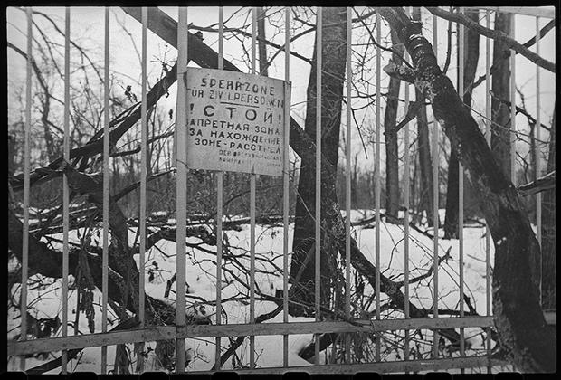 В освобожденном Пушкине. Плакат немецкого коменданта на решетке Екатерининского парка, грозящий расстрелом находящимся в этой зоне. Ленинградский фронт, 1944 год.