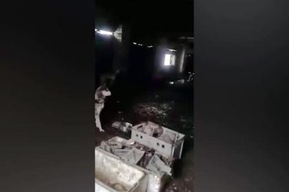 В заброшенном деревенском коровнике нашли 160 умирающих хаски