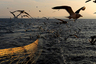 Лов минтая на «Асбьорне» в Южно-Курильском проливе.