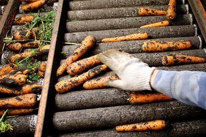 Латвия оказалась на грани овощного кризиса