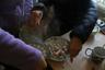 Туристы готовят пельмени по китайскому рецепту, добавляя огромное количество специй.