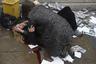 Прохожая пытается успокоить женщину, пострадавшую от наезда машины на пешеходов на Вестминстерском мосту в Лондоне. Под колесами автомобиля, управляемого террористом Халидом Масудом, погибли пять человек.