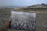 Фотография колонии пингвинов, запечатленных на африканском острове Галифакс в конце 1890-х годов. Снимок резко контрастирует с нынешней ситуацией на Галифаксе. Когда-то на острове проживали более 100 тысяч пингвинов.