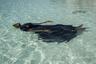 Женщины архипелага Занзибар редко умеют плавать. Местные культурные и религиозные убеждения не позволяют им войти в воду в одном купальнике. В рамках проекта Панье девочки и женщины учатся плаванию в закрытых купальных костюмах.