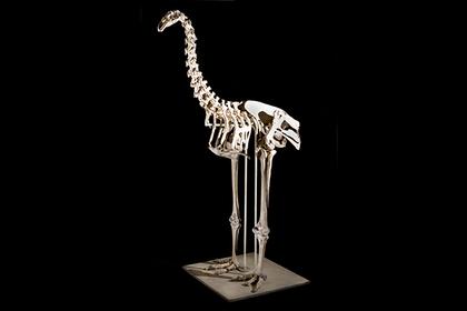 Из экскрементов извлекли ДНК вымершей птицы-гиганта