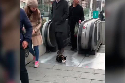Турецкий кот уснул в центре толпы и прославился