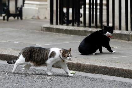В драке главных котов Британии усмотрели политические разборки