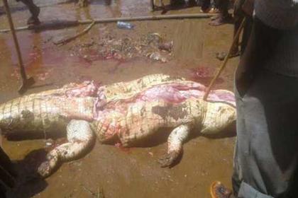 Жители деревни вспороли брюхо крокодилу и нашли там часть соседа