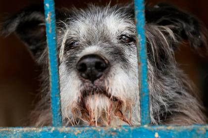 Жители Мурманска помогли вернуть всех сбежавших из приюта собак