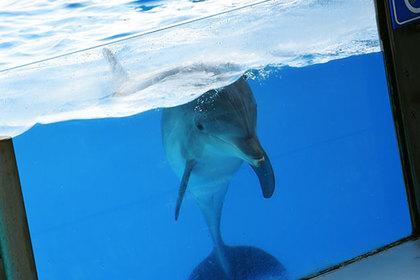 Девочка научилась приманивать дельфинов расческой