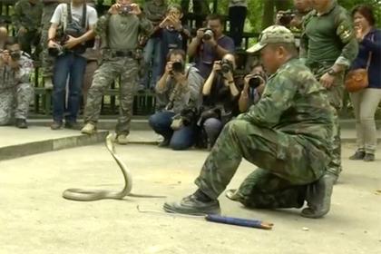 Американских солдат научили пить кровь кобр