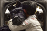 Открывавший Берлинале второй мультфильм Уэса Андерсона после «Бесподобного мистера Фокса» так и остался одним из лучших фильмов фестиваля. Бесконечная ирония режиссера и его не менее запредельный гуманизм — а также мастерство в создании на экране целых, продуманных до деталей миров — хорошо заметны даже в таком, по идее легкомысленном формате, как футуристическая притча о решившей извести всех собак Японии будущего.