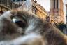 Джулия Кремонез объехала всю Европу с кошкой по кличке Маомей. Вместе они побывали в Париже, Лозанне, Барселоне, Лондоне, Цюрихе, Турине, Лионе и Брюсселе. В дороге кошка сидит в рюкзаке или бежит рядом с хозяйкой на поводке.  «Я сняла миллионы фото, но это один из самых смешных, потому что Маомей решила понюхать телефон», — говорит Джулия.