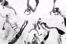 Это не хаос, а тренировка регбистов. «Во время разминки игроки плавают вокруг довольно беспорядочно, — объясняет автор снимка, австрийский фотограф Марко Местрович. — Я хотел подобраться как можно ближе к центру активности».