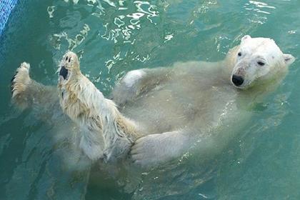 Полярного медведя поздравят с праздником