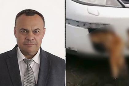 Катавшийся с застрявшей в бампере мертвой собакой водитель оказался депутатом
