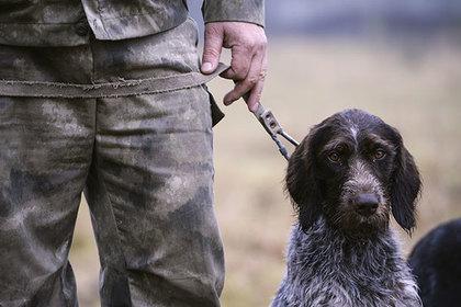 В России запретили мучать диких животных