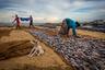 Луна-рыба, пойманная в море Негомбо, Шри Ланка. Рыбаки заняты работой.  Фотография вошла в шорт-лист открытого конкурса в категории «Путешествия».
