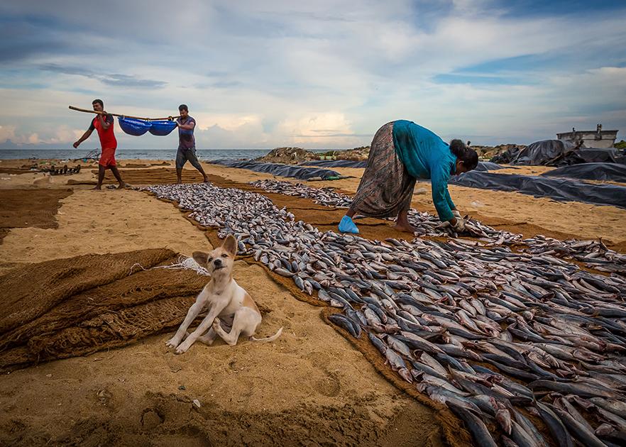«Рыбак за работой»
