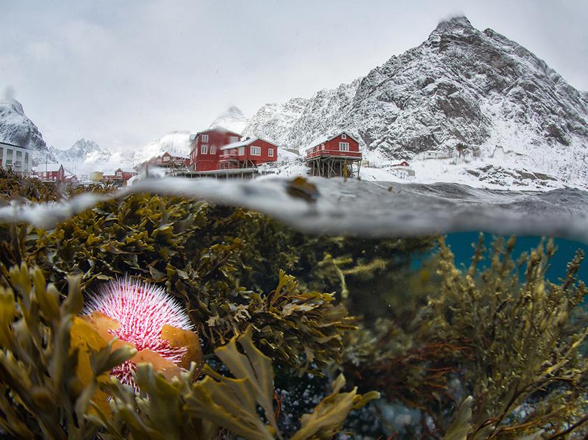 «Подводный мир зимнего Лофотена»