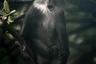 «Эта нахальная обезьяна была первым животным, которое мы увидели во время прогулочного сафари в Национальном парке Цаво в Кении», — рассказал фотограф.   Снимок вошел в шорт-лист открытой программы по тематике «Дикая жизнь».
