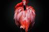 Фотография с красным фламинго стала победителем открытого конкурса в категории «Дикая жизнь».