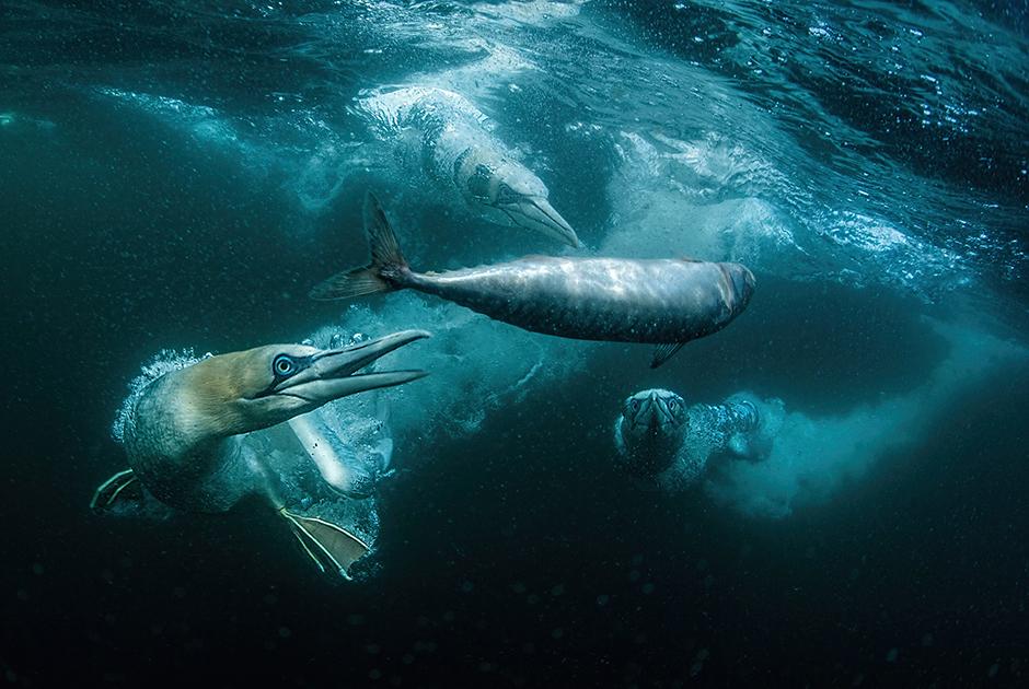 «Подводные Монстры»