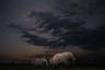 В разгар сухого сезона в Савуте, Ботсвана, слоны вынуждены стоять в очереди к водяной скважине 24 часа в сутки.  Шорт-лист открытой программы в категории «Дикая жизнь».