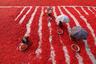 На фермах, выращивающих перец чили в Богре (Бангладеш), работает более двух тысяч человек. Они поставляют специи местным компаниям. <br> <br> Перец чили— обязательный ингредиент в блюдах бенгальской кухни, популярной в Бангладеш. Финалист в номинации «Путешествия».