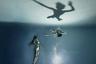 Оригинальный снимок, сделанный в бассейне, перевернут для достижения наибольшего выразительного эффекта. Финалист категории «Измененные изображения».