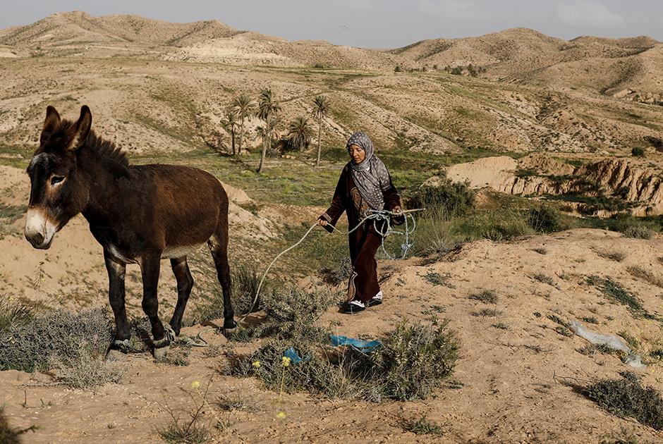 42-летняя Мунджия ведет осла к своему подземному жилищу в Матмате