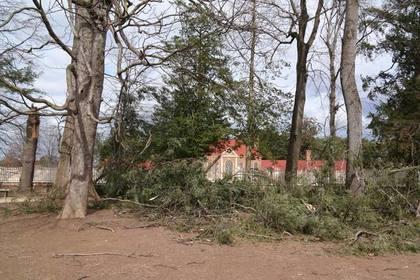 Ураган повалил посаженное Вашингтоном 227-летнее дерево
