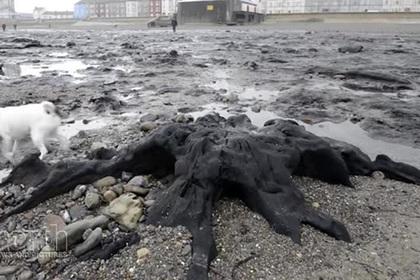 Ураган выкопал из песка доисторический лес