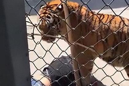 Тигр растерзал вырастившего его человека