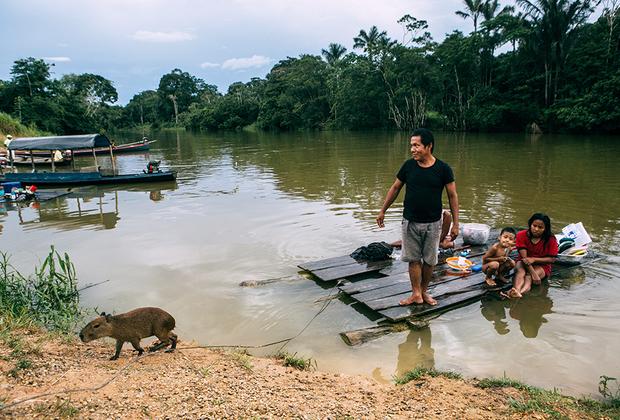 Эту капибару зовут Камилла, и ей всего три месяца. Хозяин Эстебан Анхель разрешает туристам фотографироваться с Камиллой, но не больше пяти снимков в день — маленькая капибара устает. За фото Эстебан с Камиллой берут 5000 колумбийских песо (около ста рублей).