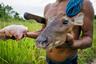 Яномами из общины Санта-Барбара вернулись с удачной охоты. У племен так мало еды, что тушку оленя разделят между тремя деревнями: Санта-Барбарой, Окамо и Лечосос. Мясо яномами никогда не жарят, только варят час-полтора в простой воде и едят с бульоном, куда крошат маниоковую крупу и маниоковые же лепешки кассаве.