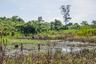 Яномами, как и большинство других племен Амазонии, практикуют подсечно-огневое земледелие: это позволяет избавиться от деревьев и сделать бедную минералами и полезными веществами почву сельвы более плодородной. Срок жизни такого поля невелик: каждые два-три года нужно выжигать новый участок.